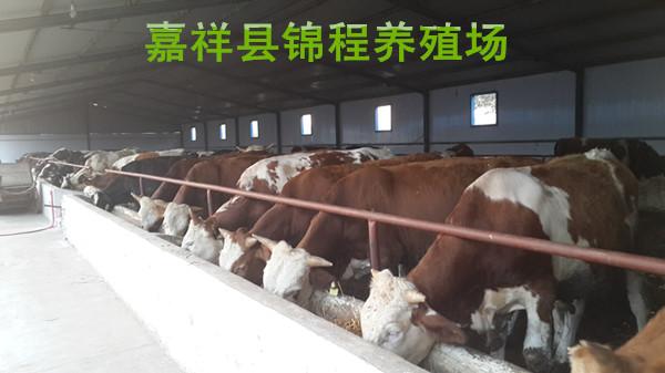 肉牛养殖场