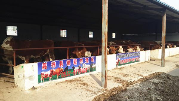 小型养牛场